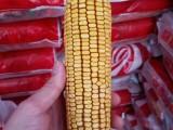 蠡玉88裕豐303鄭單958玉米種子批發價格介紹
