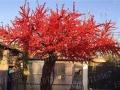 仿真植物批发仿真树定做樱花树桃花树商场酒店包柱子假