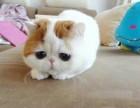 各种宠物猫,美短渐层,加菲都有,包健康
