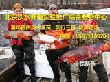 北京鱼苗养殖场淡水鱼苗批发 观赏鱼苗出售 放生鱼苗批发价格