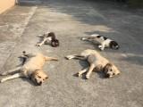 深圳龙华春节宠物狗狗寄养
