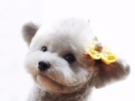 宠物美容师,宠物医师培训