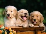 东营买博美犬 全天营业 签购犬协议 质保终生可送货上门
