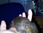 魔王松鼠,包活!