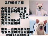 正规繁殖基地出售大中小型宠物犬保健康可送上门