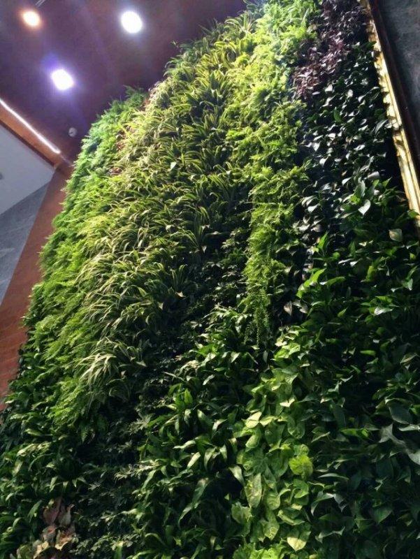 长沙立体绿化植物哪里有供应_厂家直销的立体绿化植物