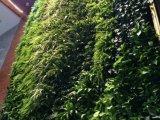 盛凯园林绿化有限公司优惠的立体绿化植物出售_立体绿化植物
