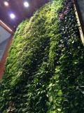 立体绿化植物-长沙优惠的立体绿化植物供应