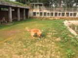 北京宠物寄养燕莎提供寄养托管单独寄养长期散养接送寄养
