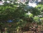北辰财富中心爱尚公寓 2室2厅64平米 精装修 半年付