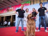 鄭州飛碟訓犬10年來專注狗狗訓練