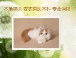 上海广州深圳北京美短猫大约多少钱 淘宝搜:双飞猫