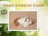 上海广州深圳北京加菲金吉拉豹蓝暹罗无毛猫报价 双飞猫