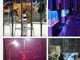 本溪出租马戏团表演海狮表演企鹅展美人鱼表演羊驼及百鸟展