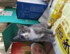 3只健康可爱猫咪,2个月大