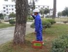 东莞中堂白蚁公司 东城防治白蚁所 寮步白蚁公司 技术精湛