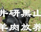 原生态井研放养黑山羊肉
