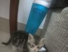 自家的母猫生的小猫仔