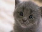 我想要一只小猫,求赠送。