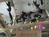 大量出售雪地松鼠,魔王松鼠,价格便宜。