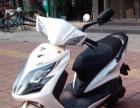 电动摩托车,正宗雅迪72付