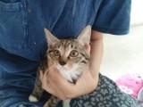 可爱小奶猫求领养,主人亲身教授养猫之道