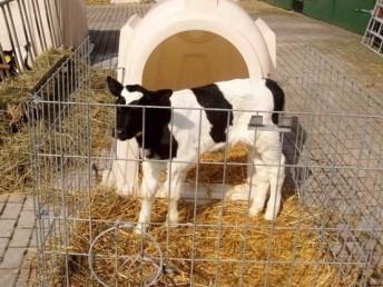 可爱牛宝宝一居室 玻璃钢犊牛岛 奇嘉工艺精湛 价格美丽