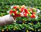 太原周边采摘园,果蔬采摘,草莓采摘樱桃采摘,欢迎团队咨询预定