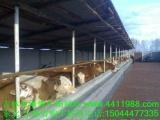 东北肉牛育肥技术