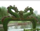 深圳周边绿化 屋顶绿化 假山水池设计 苗木批发