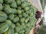 山东大棚西瓜代购/山东西瓜种植基地 西瓜供应基地