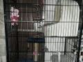 转让超大号猫笼猫别墅,高1.75米送笼中猫架(不含其他物品)