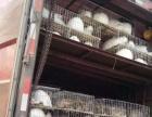 大型兔子养殖合作社招加盟商加盟 种植养殖