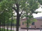 星光家园一期房屋出售 246平米
