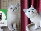 南通哪里开猫舍卖蓝猫 去哪里可以买得到纯种蓝猫
