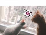 家养异瞳小白猫很漂亮