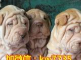 全国最牛逼的十大猛犬出售 猛犬集中营 狗狗非常漂亮