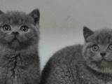 【米粒家的猫】商家,买猫咪认准品牌