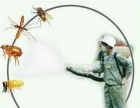 24小时︱灭鼠︱灭蟑螂︱灭白蚁︱杀虫︱灭四害公司