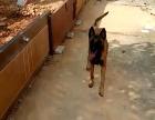 东莞家庭式宠物训练
