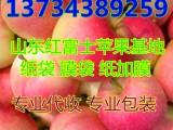 山东嘎啦苹果价格嘎啦苹果产地