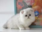 大连哪里有宠物猫出售,大连哪里有卖纯种金吉拉价格
