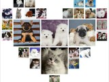 西安养殖场直销 出售世界名犬丨宠物狗狗丨全国托运免费送货