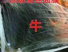 优源6+1加减面膜国际董事郭蓉诚招全国各地优秀代理商