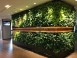 广州市绿大师植物墙景观墙绿化墙设计与安装