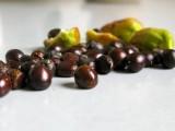 白芍种子价格 白芍种子 优质白芍种子批发
