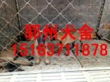 梅州马犬多少钱一只哪里有卖马犬的