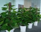 珠海绿植租赁 花卉租摆 绿化维护
