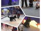 狗狗训练学校 宠物警犬学校 训犬师培训学校