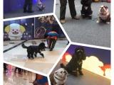 狗狗訓練學校 寵物警犬學校 訓犬師培訓學校